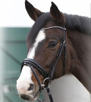 filet pour cheval