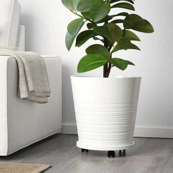 cache pot plante